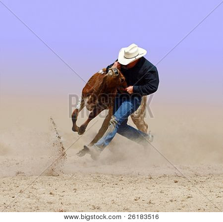 Cowboy wrestling with a steer. Isolated with clipping path.