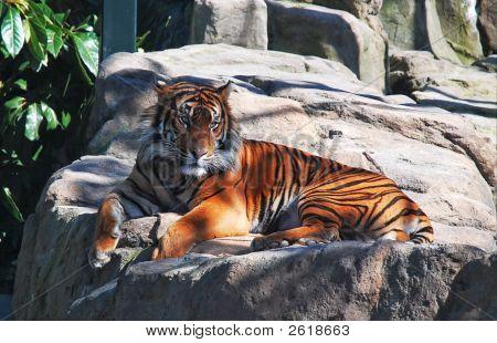 Auckland Zoo 19807 0092