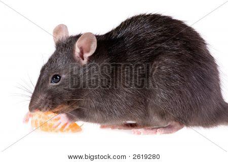 Rata y mandarina