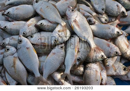 A catch of Shari (local name) for sale at a Doha, Qatar, fishmarket.