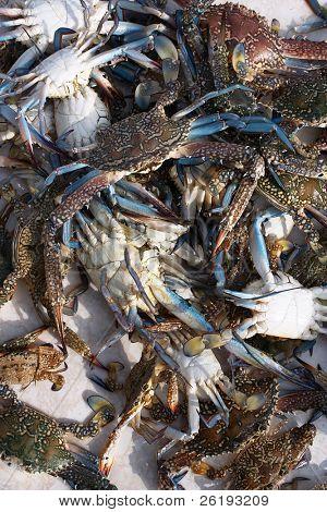 Fresh, live crabs at a fishmarket