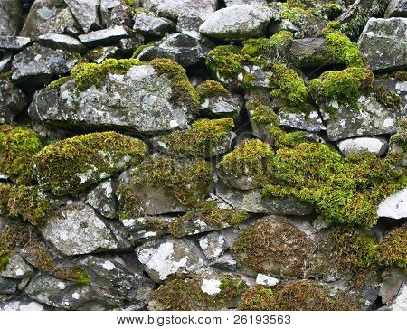 Drystone wall  covered in moss and lichen for a background