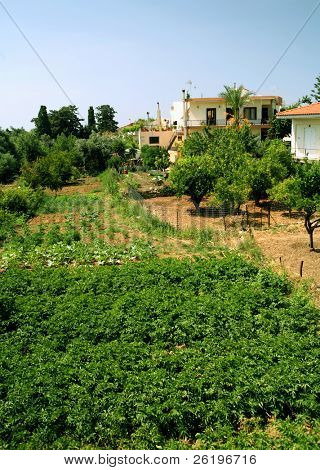 An example of subsistance agriculture in Prines village, Crete, Greece. Potatoes are in the foreground. Other crops include zuccini, onions, citrus fruit trees and olive trees.