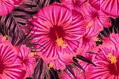 Pink Red Exotic Pattern. Monstera And Hibiscus Flowers Tropical Bouquet.  Saturated Large Floral Swi poster