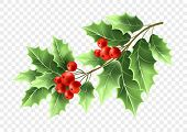 Christmas Holly Tree Branch Realistic Illustration. Xmas Decorative Plant. Green Holly Twig With Lea poster