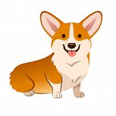 Corgi Dog Vector Cartoon Illustration. Cute Friendly Welsh Corgi Puppy Sitting, Smiling With Tongue  poster