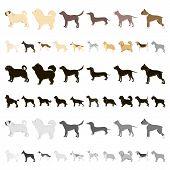 Dog Breeds Cartoon Icons In Set Collection For Design.dog Pet Vector Symbol Stock Web Illustration. poster