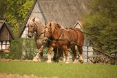 stock photo of horse plowing  - Nostalgic cultivation with two magnificent horses in Germany - JPG