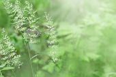 Herbs In Nature Under Sunlight. Forest Herbs On Green Blurred Background. Selective Focus. Natural H poster