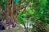 Small Pond With Green Subtropical Potted Plants On The Shore. poster