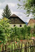 Organic Vegetable Garden In A European Village With Corn, Beans, Tomatoes And Companion Planted Flow poster