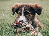 Playful dog playing with dog toy poster
