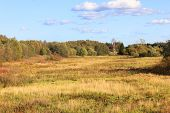 Meadow View On Autumn Nature Background. Rural Empty Field On Sunny Day, Beautiful Countryside Scene poster