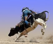 stock photo of bull-riding  - HASTINGS  - JPG