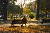 Man Sitting On Bench In The Park. Man On The Bench In The Park In Autumn. Autumn Colors In The Park. poster