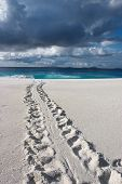 pic of sea-turtles  - Track of an endangered Hawksbill Turtle disappearing into the sea under a lowering sky - JPG