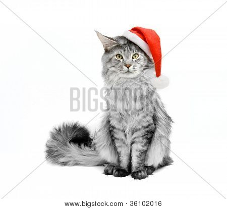 Gray Cat In Santa Suit