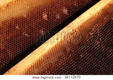 Honey production