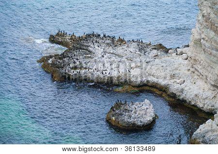 Bird Flock On The Cliff
