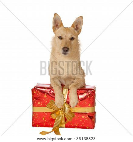 Dog With A Christmas Gift