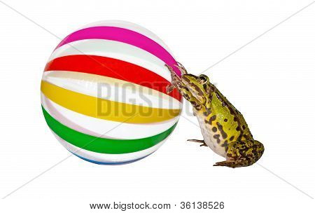 Frog Pushing A Large Beachball