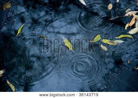 Drops Of Rain Water On A Fresh Asphalt