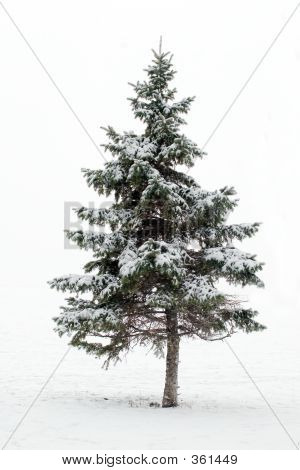 Christmas Tree Whiteout