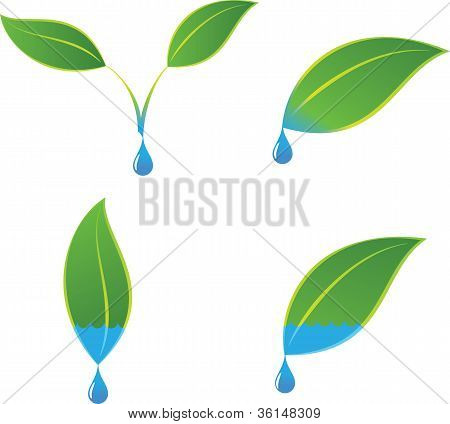 Green eco plant and water logo concepts