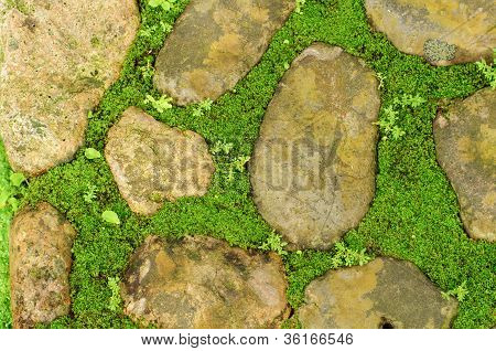 Grass Between Stones