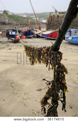 Seaweed covered rope with boats in the distance