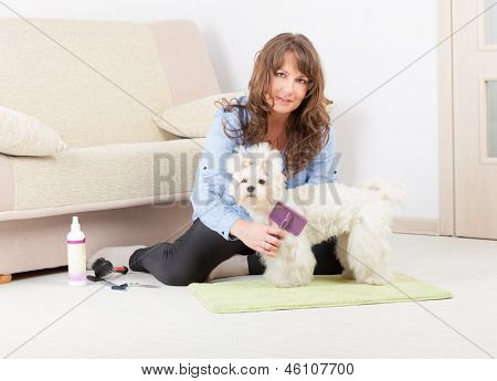 Smiling woman grooming a dog purebreed maltese on the floor at home