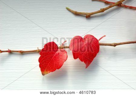 Love Leaves (horizontal)