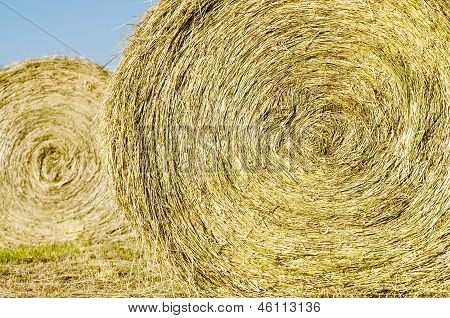 Bales of hay in field during spring