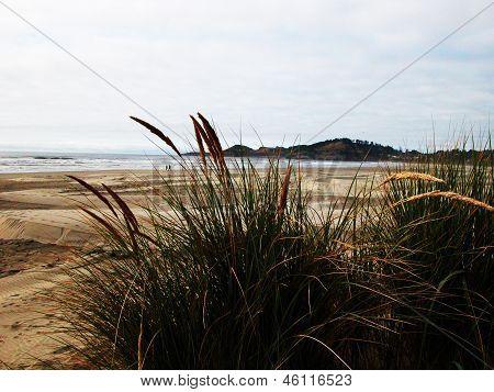 Agate Beach - Oregon
