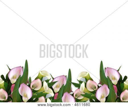 Calla Lilies Border Pink
