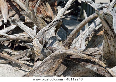 Ocean Driftwood