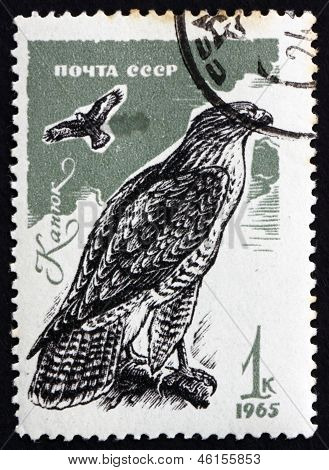 Postage Stamp Russia 1965 Common Buzzard, Bird Of Prey