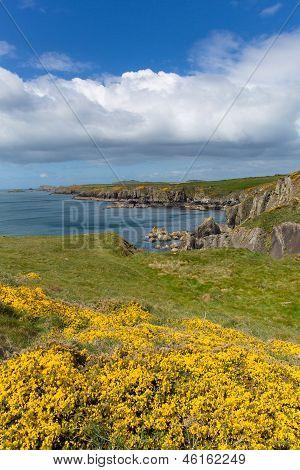 Welsh Coast Path Pembrokeshire West Wales