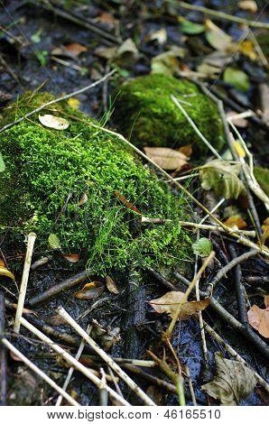 swamp moss