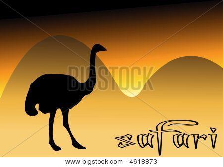 Ostrich In Safari
