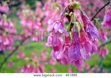 Spring Shower Flowers