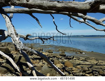 Fallen tree at the shore
