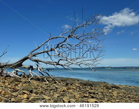 Fallen tree at a shore