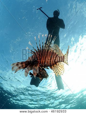 Spearfishing With Lionfish