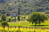 Abbey Of Sant'antimo With Vineyards, Montalcino, Tuscany, Italy