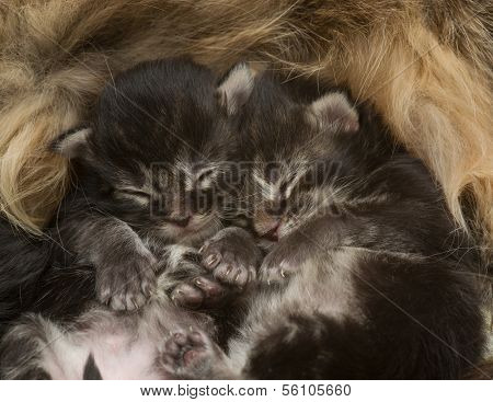 Two Newborn Kittens Sleeping