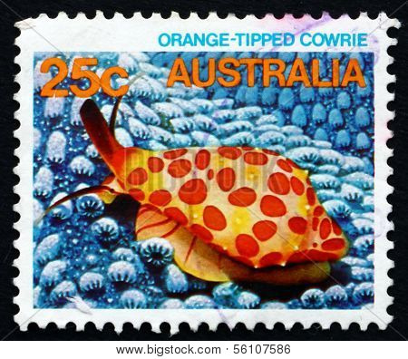 Postage Stamp Australia 1984 Orange-tipped Cowrie, Marine Life