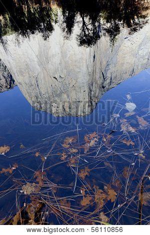 Leaf Detail, Merced River, Yosemite