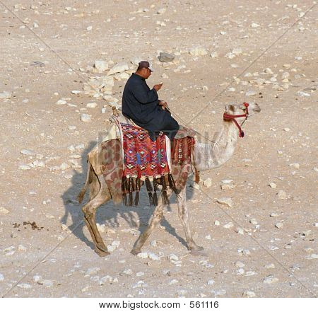 Camel Rider With Phone