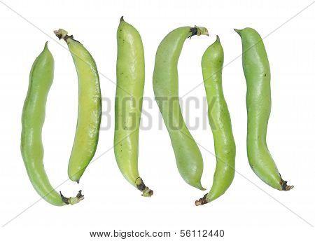 Six Fava Beans